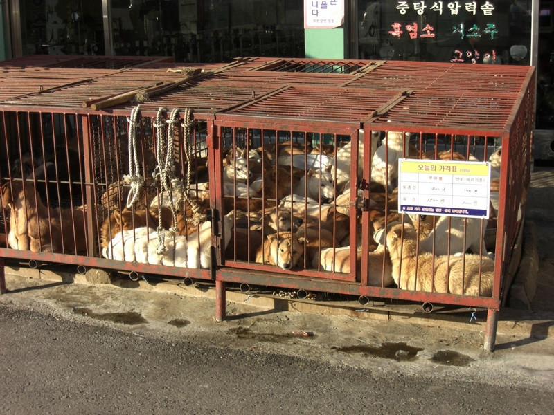 http://koreandogs.org/act-of-causing-physical-suffering-now-punishable-as-animal-abuse/?utm_source=sendinblue&utm_campaign=Second_-Dog_Meat_Free-_City__Step_forward_in_Animal_Protection_Law&utm_medium=email