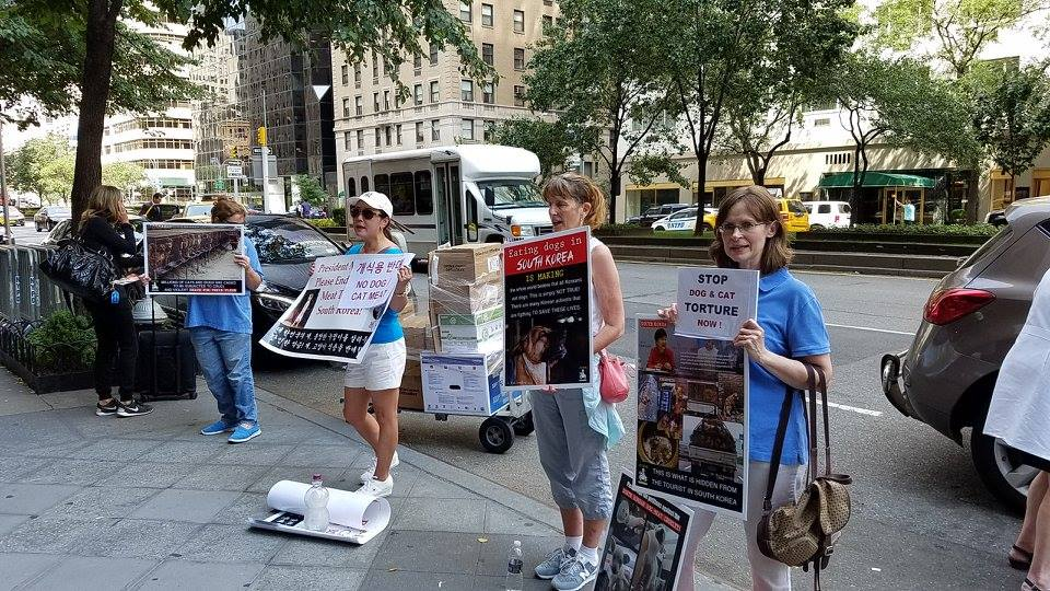 International Day of Action for South Korean Dogs & Cats (Day 3)