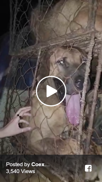 http://koreandogs.org/watch-live-horrific-cruelty-of-dog-slaughterhouse-in-seongnam-south-korea/?utm_source=sendinblue&utm_campaign=Horror_in_the_night!_Seongnams_Dog_Slaughterhouses__Positive_Responses_from_Sister_City_Campaigns&utm_medium=email