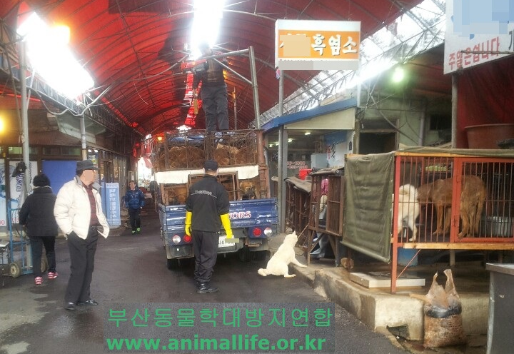 [Shocking Report] Scene of dog hanging at the Busan Gupo market! Please join us in reporting this case!