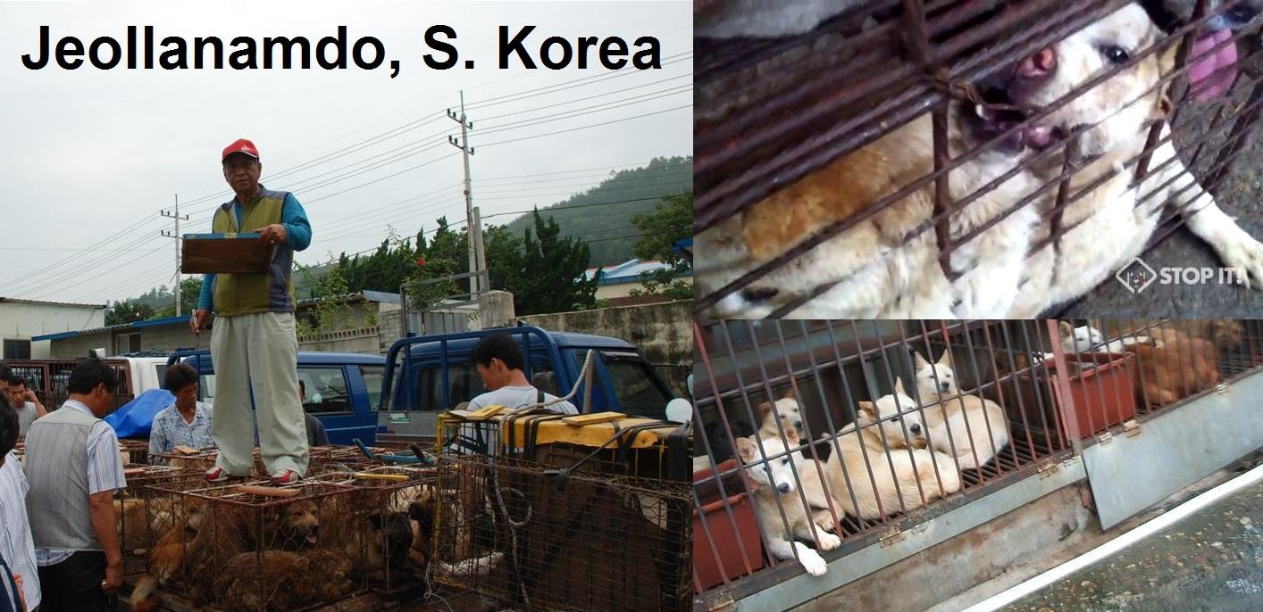 Friendship State Campaign – Jeollanam Province, South Korea – Virginia
