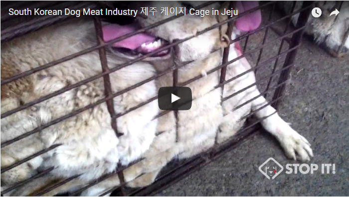 South Korean Dog Meat Industry 제주 케이지 Cage in Jeju