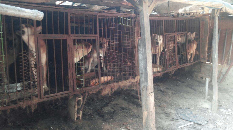 Hell on Earth, Yangsan Sangbuk-myeon Dog Farm.