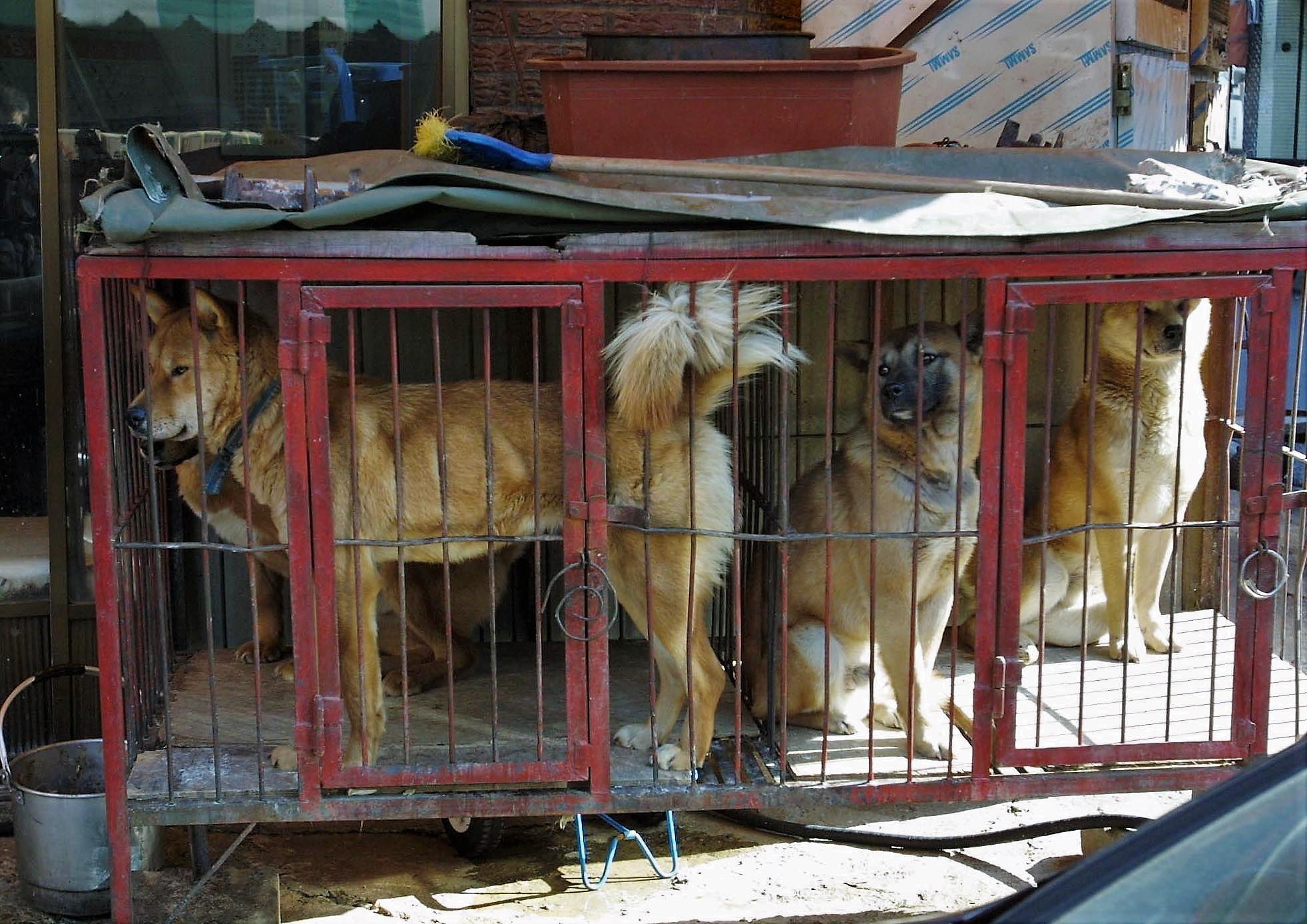 http://koreandogs.org/sister-city-campaign-daegu-south-korea-milwaukee-wisconsin/?utm_source=sendinblue&utm_campaign=Dogs_Slaughterhouses_in_School_Cleanup_Zone!___Milwaukee__Daegu_Sister_City&utm_medium=email