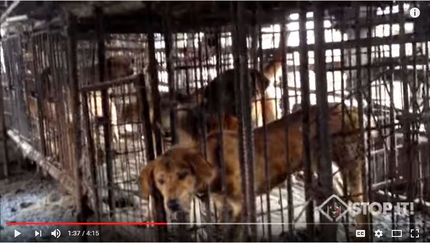 Namyangju - South Korean Dog Meat Industry 남양주 개농장, 도살장