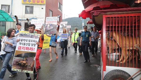 Busan Buk-gu (Northern District) Office puts into operation its first Task Force Team for Gupo Livestock (Dog Meat) Market.