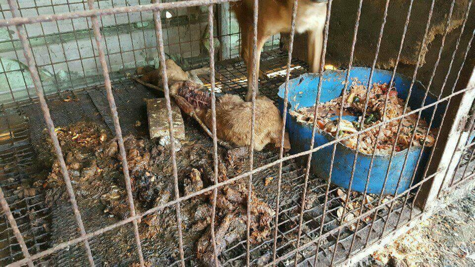 http://koreandogs.org/kara-ministry-environment/?utm_source=sendinblue&utm_campaign=Koreas_Ministry_of_Environment_Supporting_Dog_Meat_Industry&utm_medium=email