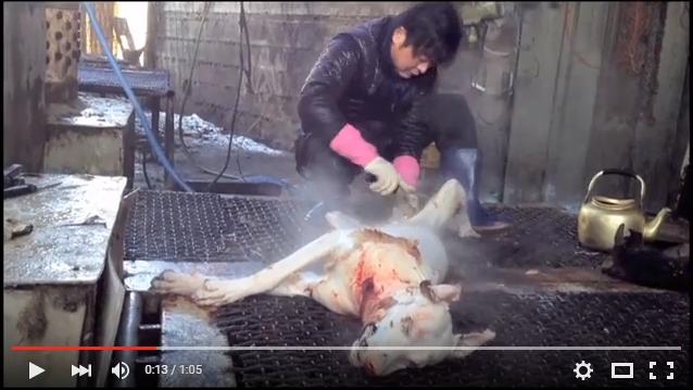 Shocking Cruelty of South Korean Dog Meat Industry - Boycott Samsung, Kia, Hyundai, LG, SK, Daewoo!