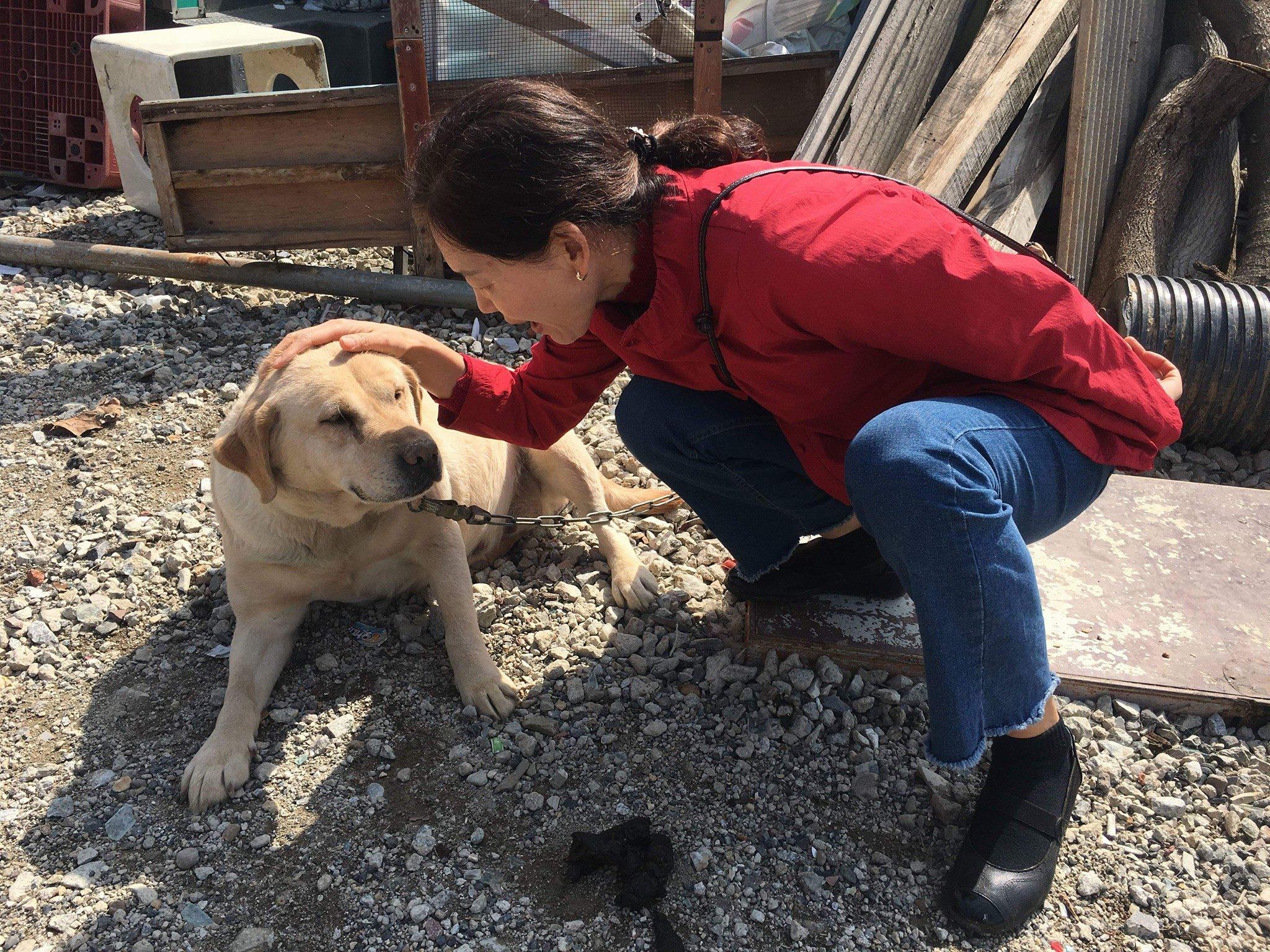 https://www.facebook.com/koreandogs/posts/2109950635689542?utm_source=sendinblue&utm_campaign=Koreas_Constitution_to_Establish_National_Policy_on_Animal_Protection__Sanary__Hongcheongun_Sister_City&utm_medium=email