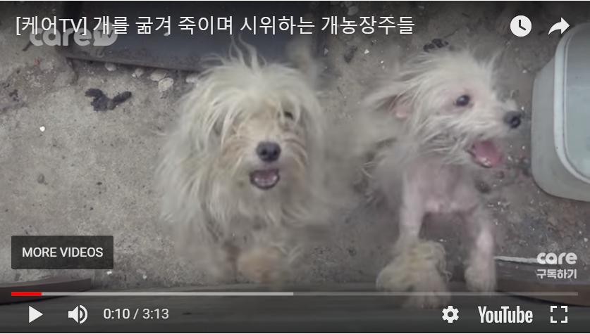 http://koreandogs.org/hanam-dog-slaughters-extortion/?utm_source=sendinblue&utm_campaign=Your_Actions_Can_Save_Lives!&utm_medium=email
