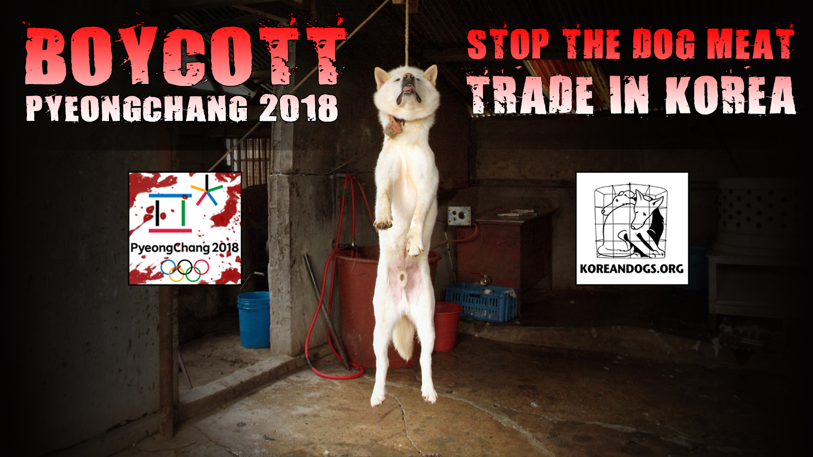 Pyeongchang's project to hide the Dog Meat Restaurants from Olympic visitors!