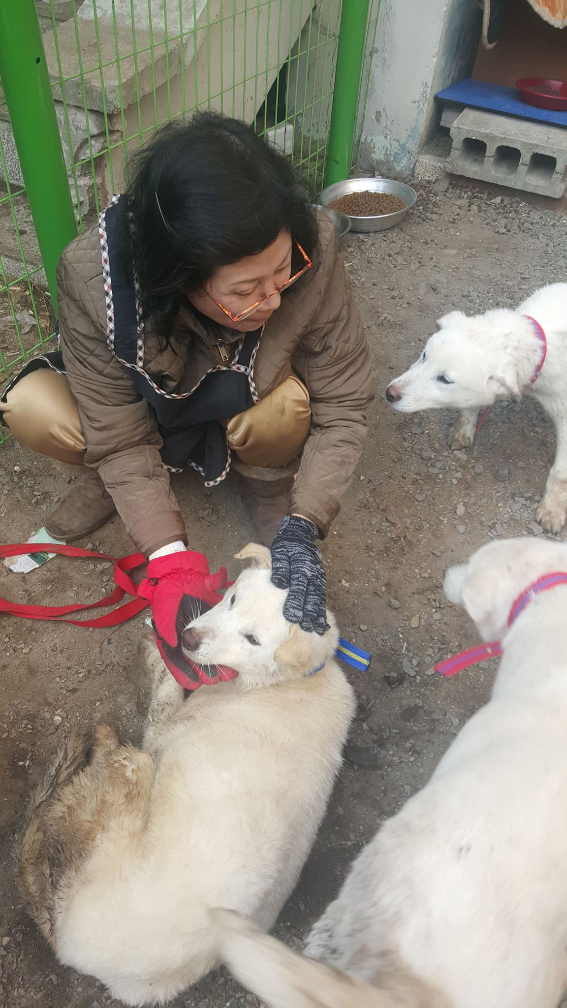 SaveKoreanDogs.org needs home for the rescued dogs