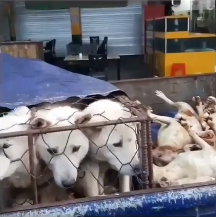https://www.facebook.com/100006569132221/videos/2167769793451971/?utm_source=sendinblue&utm_campaign=Seoul_National_Universitys_Dark_Connection_with_Dog_Meat_Farms__We_Demand_the_Truth_from_SNU!&utm_medium=email