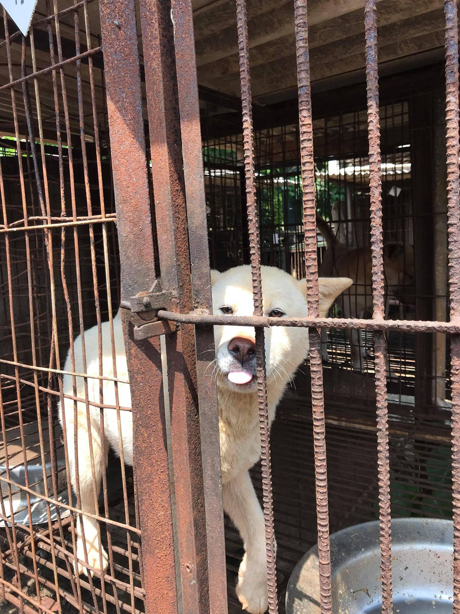 https://www.facebook.com/SaveKoreanDogs/posts/1126567190826673?utm_source=sendinblue&utm_campaign=URGENT__DEADLINES_APPROACHING_Clicks_for_2_Official_Korean_Government_Petitions_against_Dog_and_Cat_Meat_Consumption!&utm_medium=email