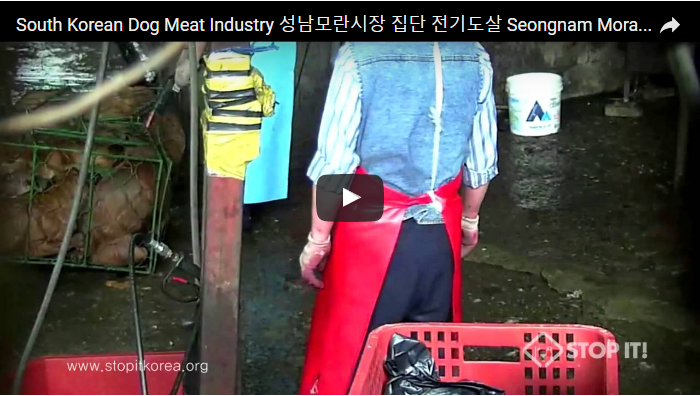 South Korean Dog Meat Industry 성남모란시장 집단 전기도살 Seongnam Moran Market Mass Electric torture of dogs