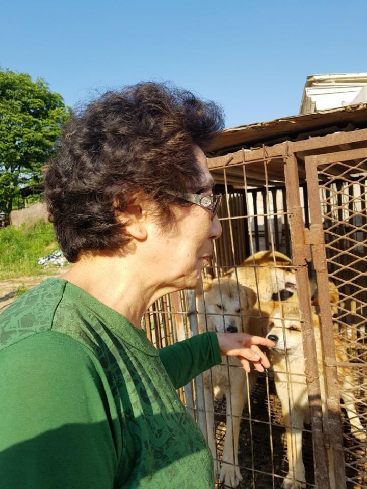 Another Rescue by Nami Kim (SaveKoreanDogs.org)