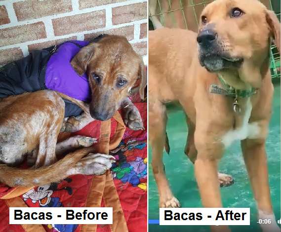 Bacas Before & After