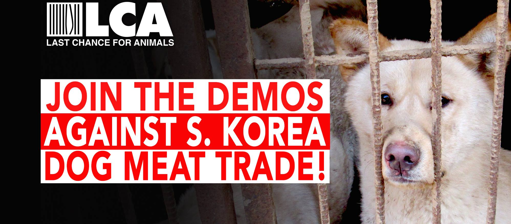 Join the Two-Day Demo Against the South Korean Dog Meat Trade