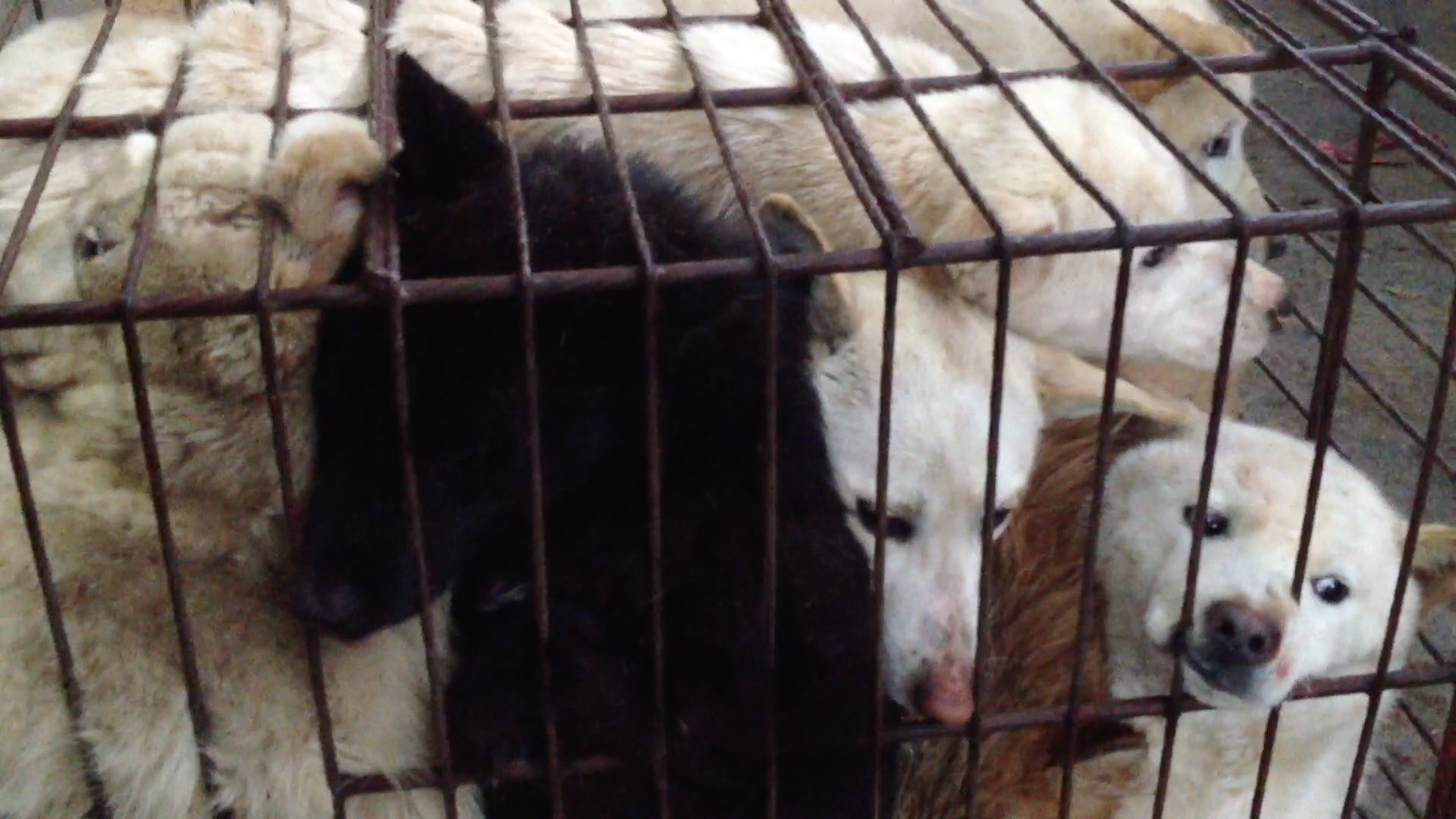 http://koreandogs.org/dmp/?utm_source=sendinblue&utm_campaign=Calls_to_Action__Busan_KAPCA_shuts_down_dog_farm_and_rescue_puppies&utm_medium=email