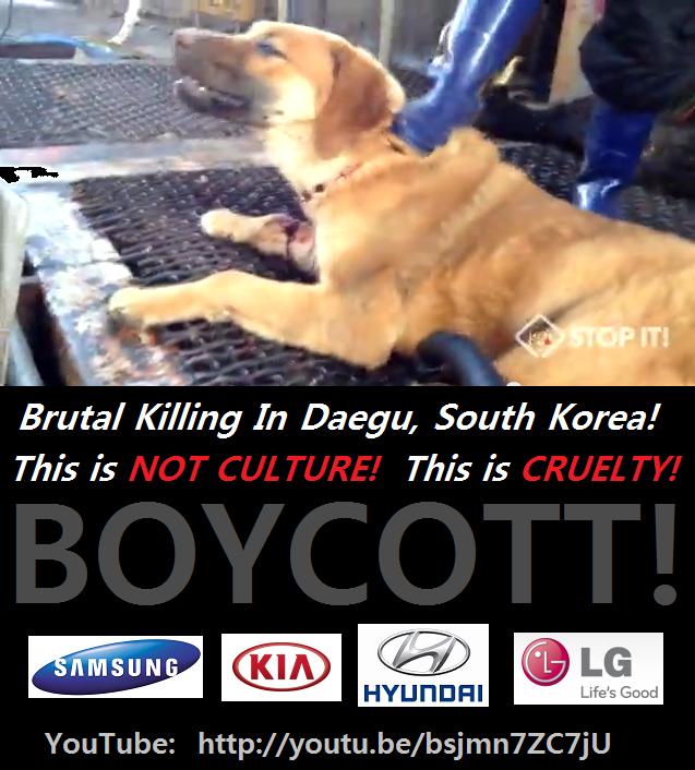 South Korean Dog Meat Industry 대구 무참히 도살 Brutal killing in Daegu