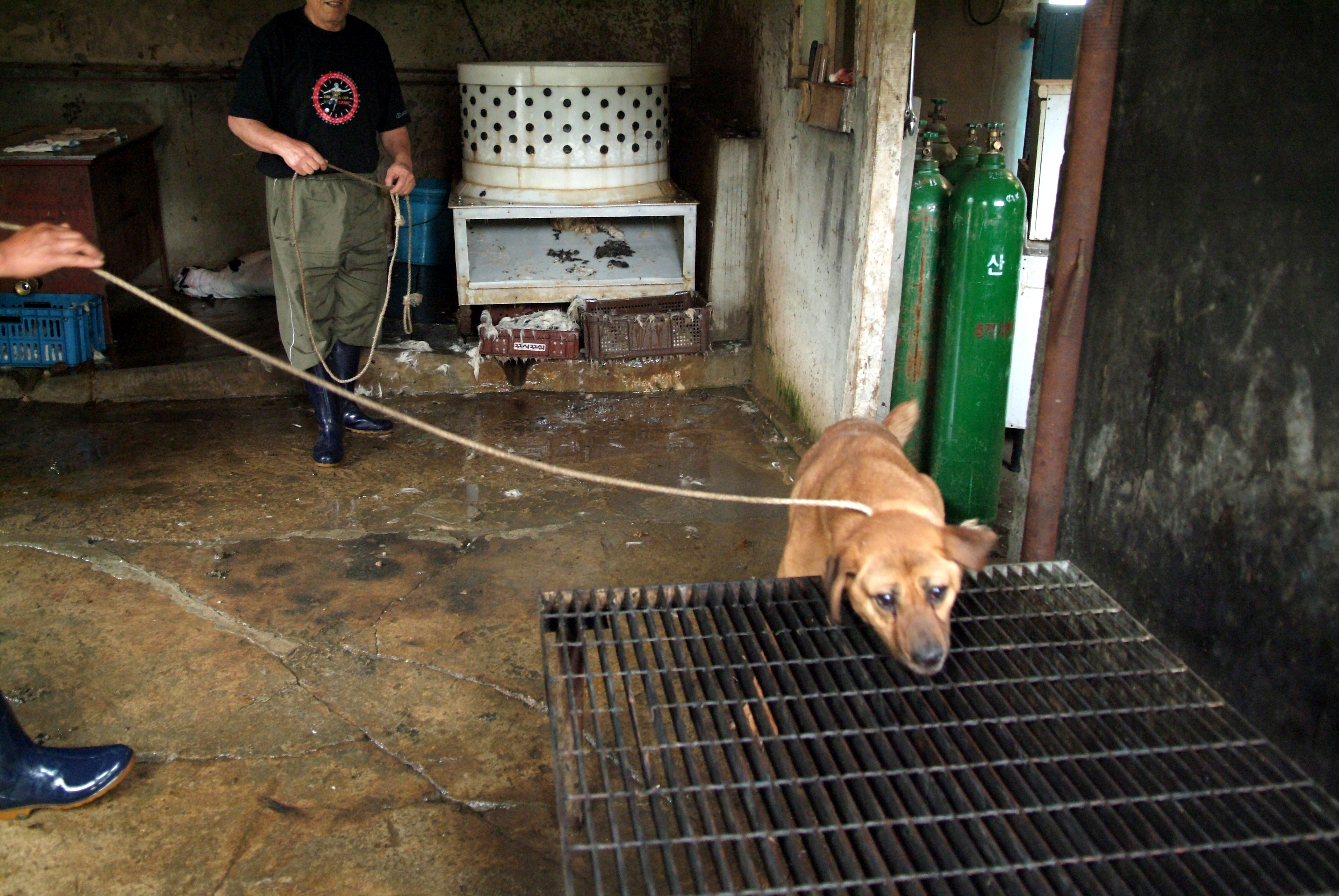[Urgent] Need 200K Signatures by July 17, 2018 – Korean Government Official Petition against Dog and Cat Meat Consumption!