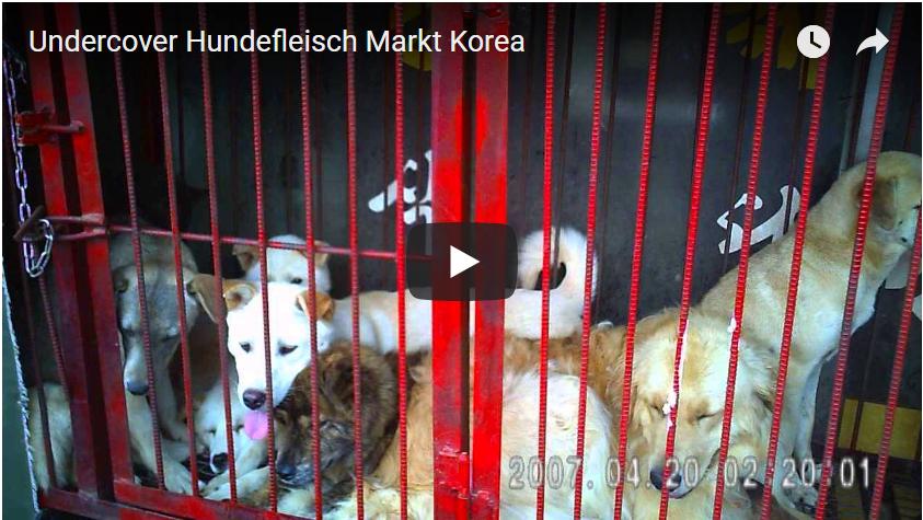 Undercover Hundefleisch Markt Korea