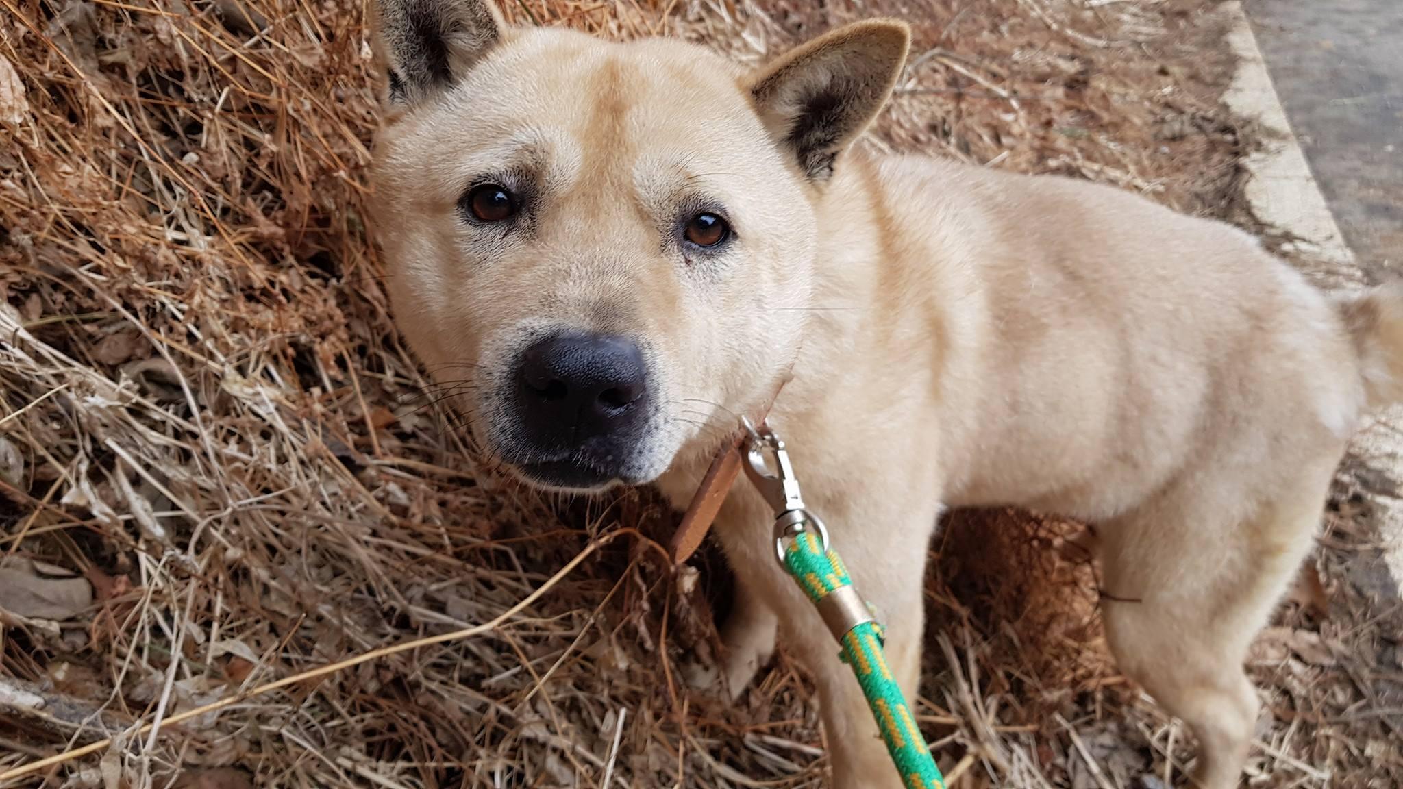 http://savekoreandogs.org/dogs-available-for-adoption/?utm_source=sendinblue&utm_campaign=Dogs_Slaughterhouses_in_School_Cleanup_Zone!___Milwaukee__Daegu_Sister_City&utm_medium=email