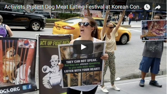 Activists Protest Dog Meat Eating Festival at Korean Consulate