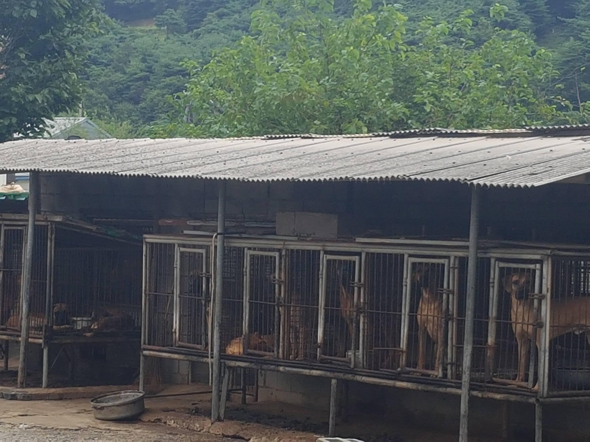 https://www.facebook.com/SaveKoreanDogs/?utm_source=sendinblue&utm_campaign=Your_Actions_Can_Save_Lives!&utm_medium=email