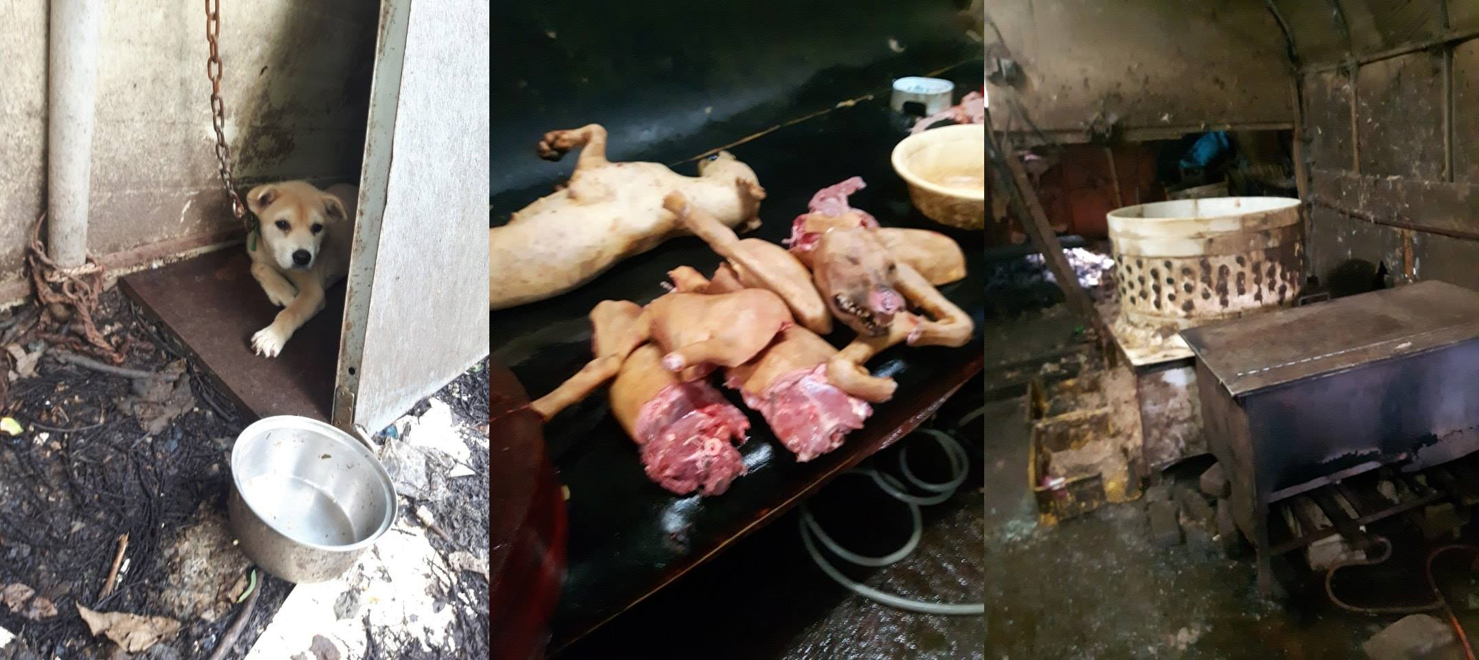South Koreans: start taking responsibility for enforcing your own country's laws: stop the illegal dog and cat meat trades.