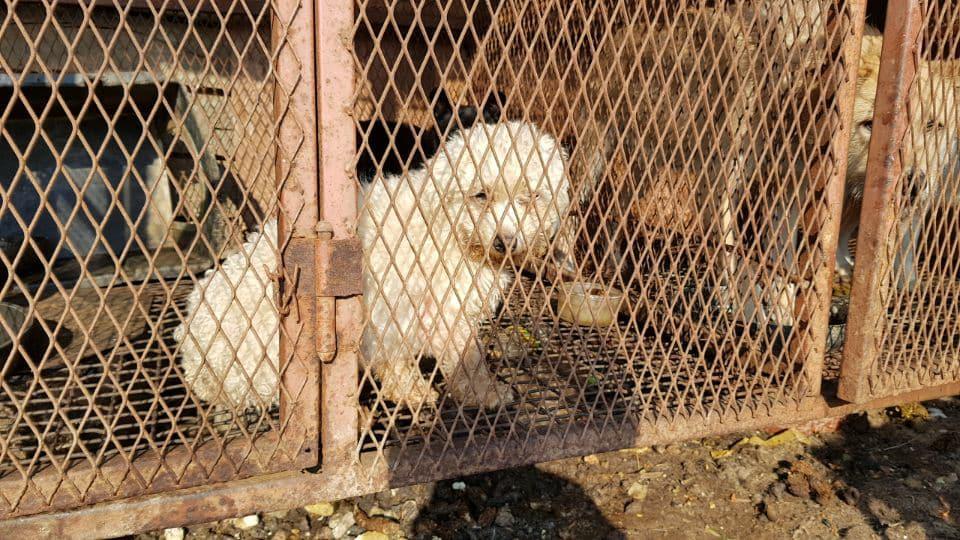 http://koreandogs.org/update-bkapca-rescue-yangsan/?utm_source=sendinblue&utm_campaign=Calls_to_Action__Busan_KAPCA_shuts_down_dog_farm_and_rescue_puppies&utm_medium=email