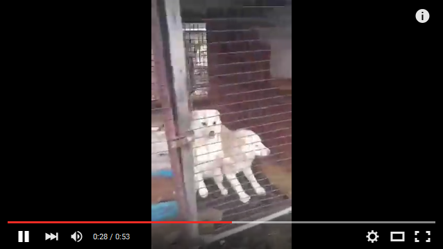 [Update] Incheon Kyesan Dog Farms
