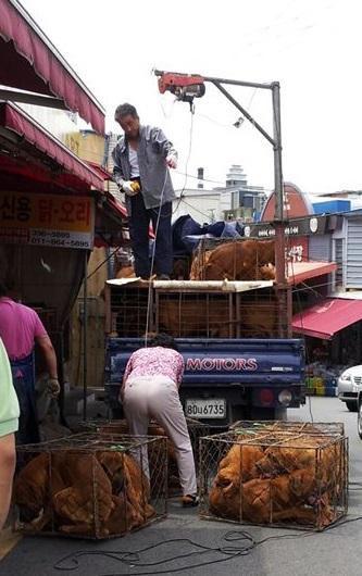 http://koreandogs.org/busan-bukgu-gupo/?utm_source=sendinblue&utm_campaign=Dogs_Slaughterhouses_in_School_Cleanup_Zone!___Milwaukee__Daegu_Sister_City&utm_medium=email