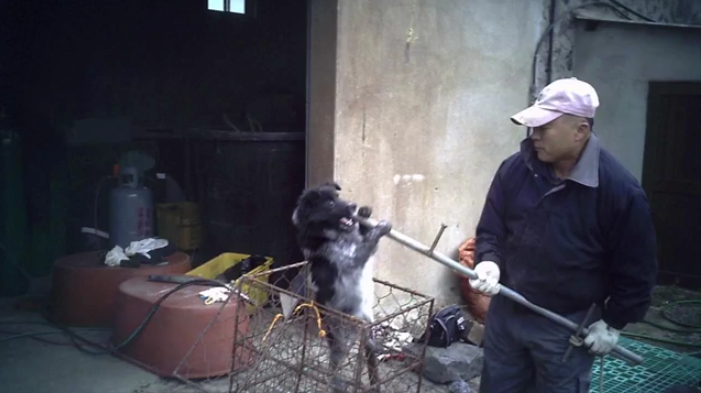 Update on AN EXPOSÉ ON THE DOG MEAT INDUSTRY IN SOUTH KOREA