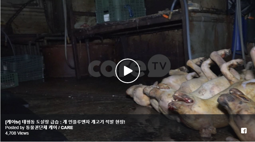 https://www.facebook.com/CAREanimalKorea/videos/534405313677033/?utm_source=sendinblue&utm_campaign=Exposing_Seongnams_Illegal_Dog_Slaughterhouses__New_Calls_for_Action!&utm_medium=email