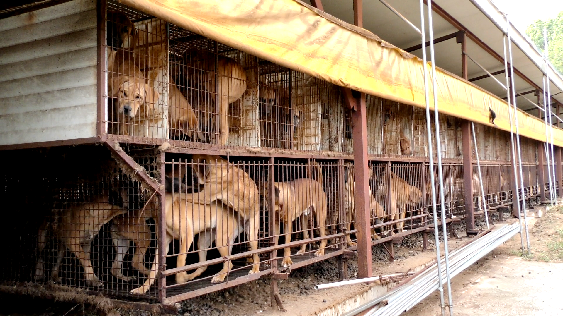 http://koreandogs.org/petitions/?utm_source=sendinblue&utm_campaign=Milk_and_Shake_waiting_for_home__New_Calls_for_Action&utm_medium=email
