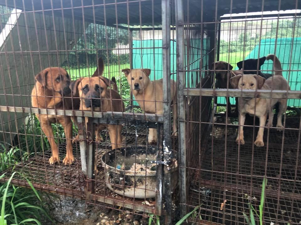 http://koreandogs.org/petitions-korean-cities/?utm_source=sendinblue&utm_campaign=Korean_Supreme_Court__Killing_dogs_by_electrocution_is_cruel!&utm_medium=email