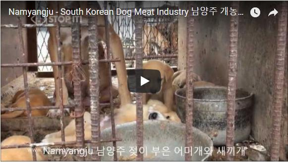 Namyangju - South Korean Dog Meat Industry 남양주 개농장, 도살장