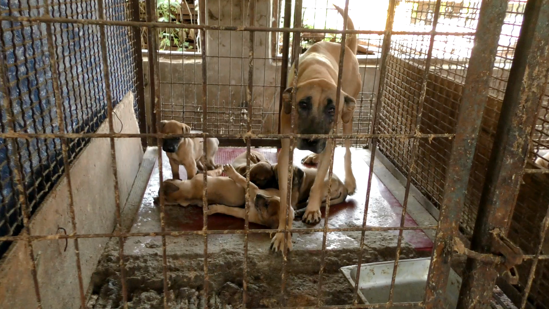Mayor Julie Pickering of The Royal Borough of Kingston upon Thames, London: Tell Friendship City, Gwanak-gu, Seoul, South Korea, That We're Opposed to the Torture and Consumption of Dogs and Cats.
