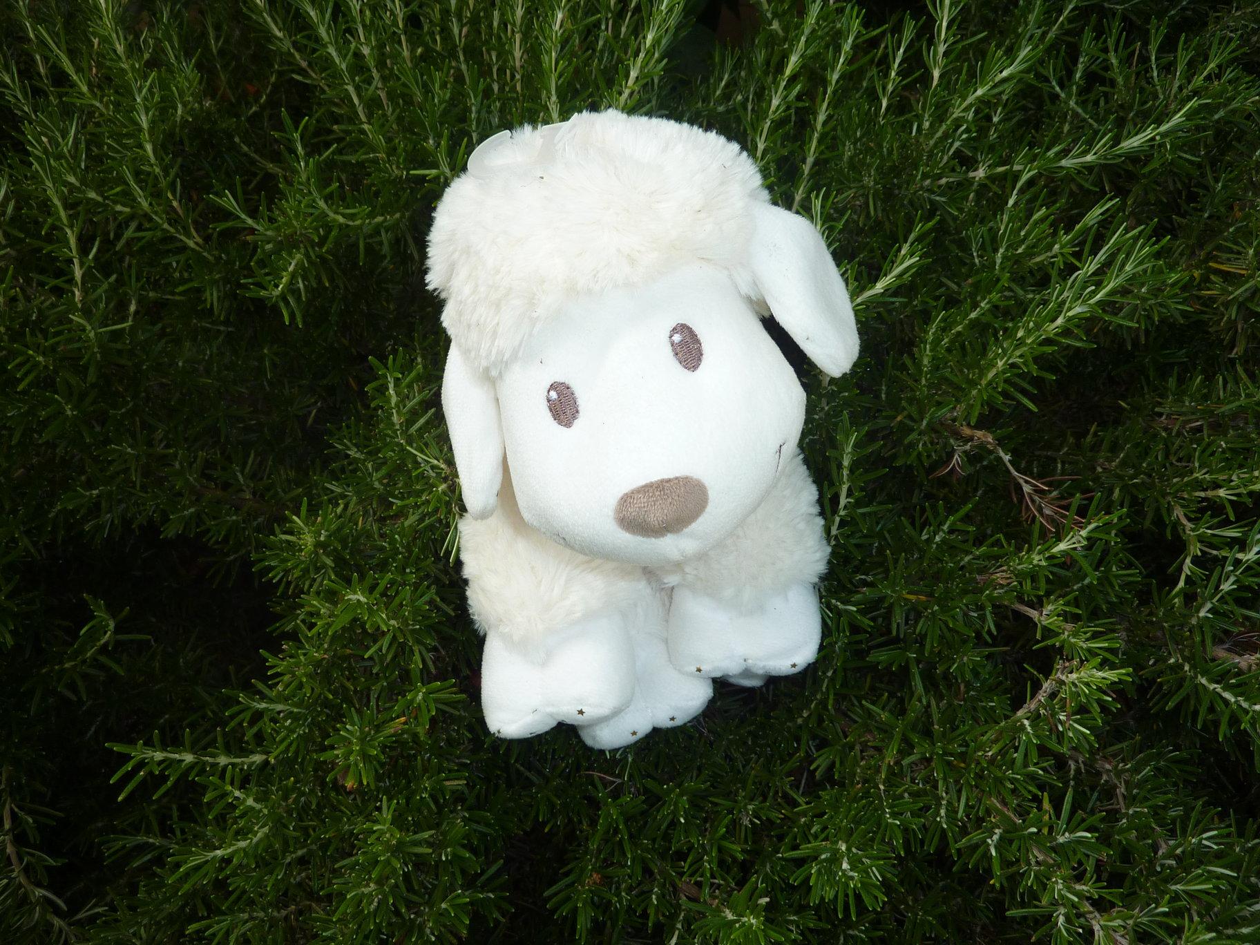 M'CY le mouton qui sourit !