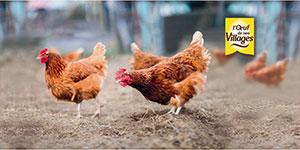 Label PME+ : ODNV, un groupement d'éleveurs engagés