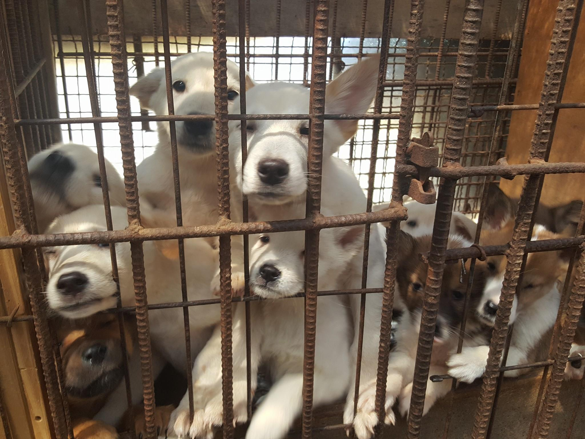 Bucheon Mayor Kim is visiting Sister City Bakersfield – time to urge the ending of the dog meat cruelty