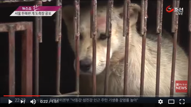 'Street of Horror' Dog slaughterhouses in the heart of Seoul