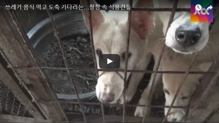 World Vision: Eating companion animals is detrimental to the health of Korean children.