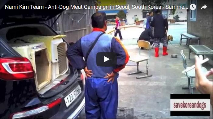 Nami Kim Team - Anti-Dog Meat Campaign in Seoul, South Korea - Summer 2015