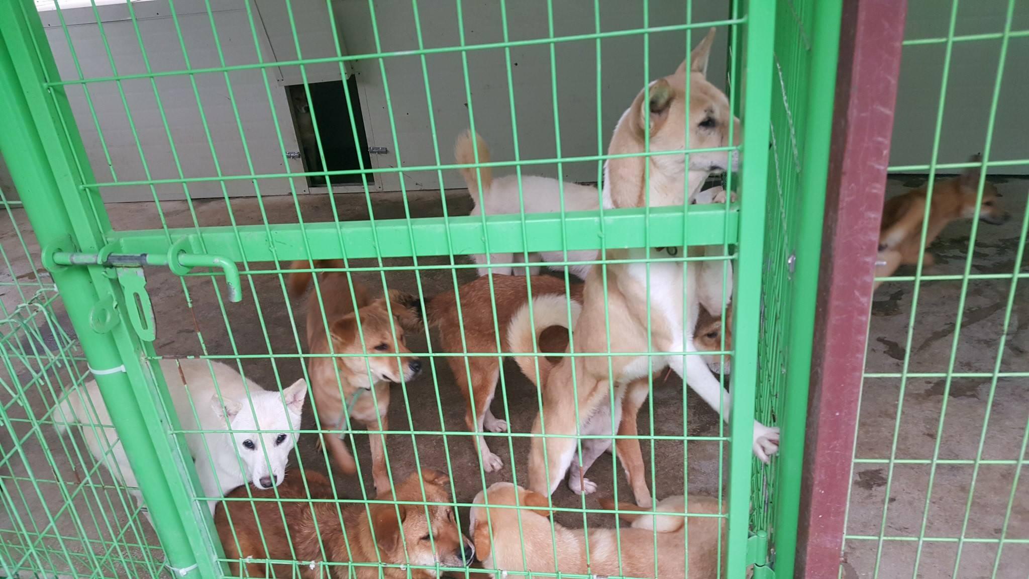SaveKoreanDogs.org