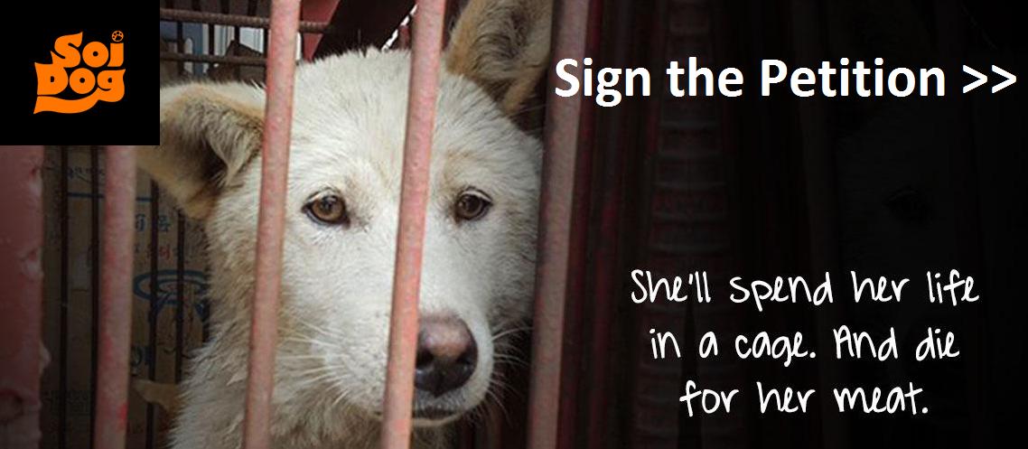HELP SHUT DOWN SHOCKING 'MEAT DOG' FARMS IN SOUTH KOREA