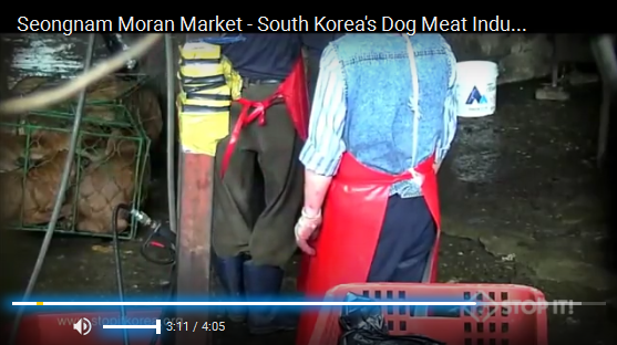 Seongnam Moran Market - South Korea's Dog Meat Industry 성남 모란시장 개도살장