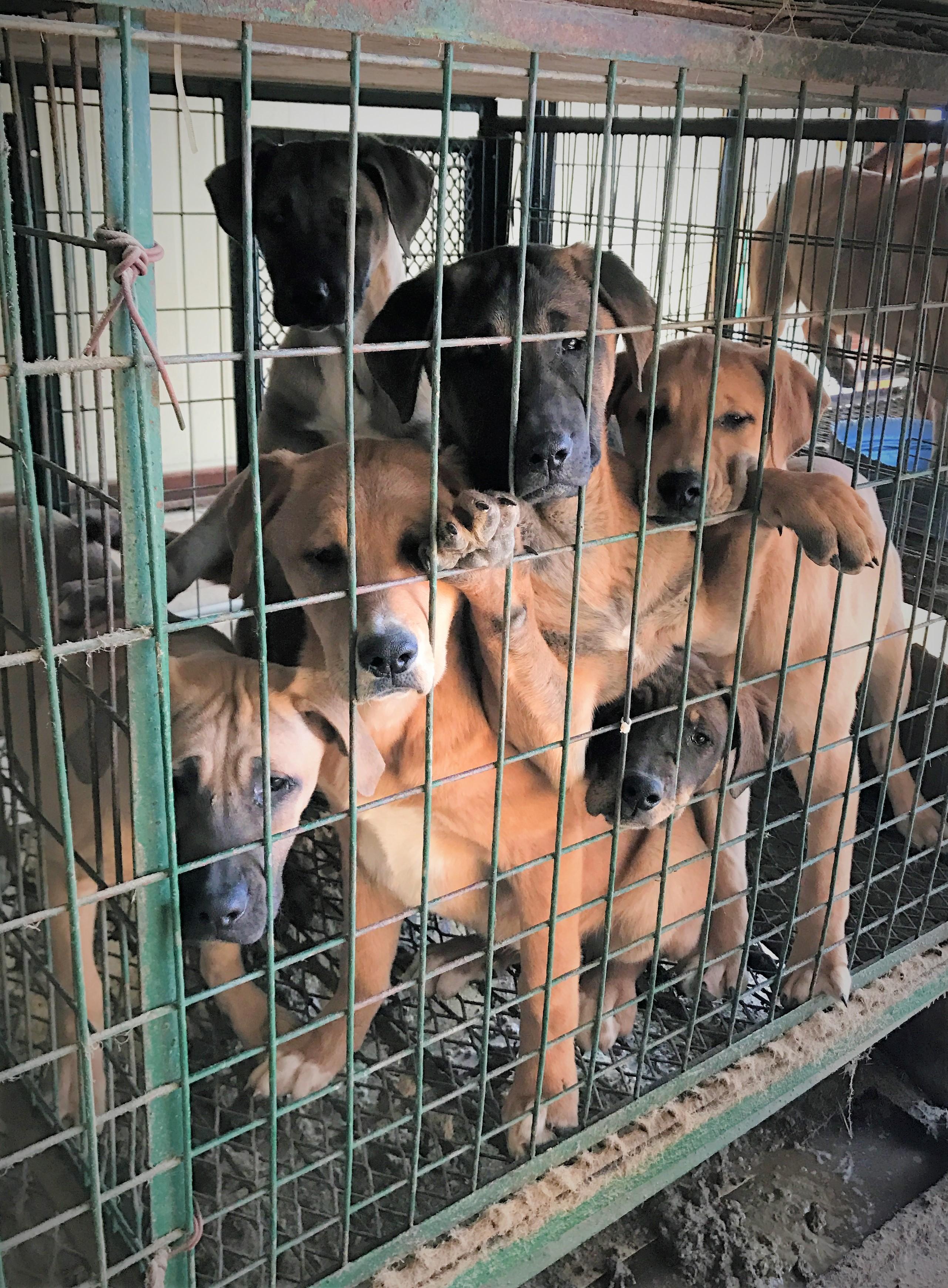 SaveKoreanDogs need your partnership to save the Korean dogs.