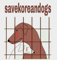 http://savekoreandogs.org/donate/?utm_source=sendinblue&utm_campaign=Korean_Baseball_and_Dog_Soju__Responses_from_BOA__WSAVA&utm_medium=email